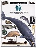 鯨 (ビジュアル博物館)