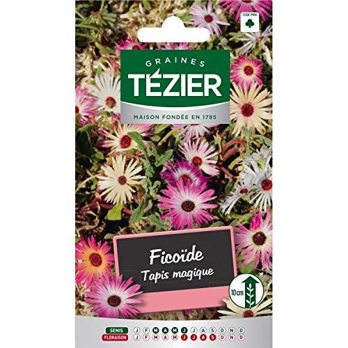 Tezier - Ficoïde Tapis magique - Fleurs vivaces