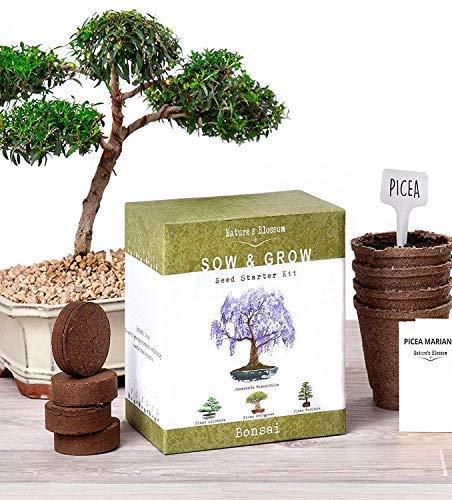 Tree Plants & Seeds