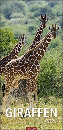 Giraffen XL Kalender 2021