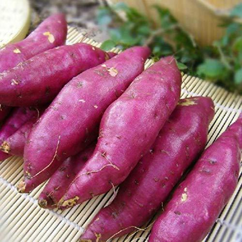 Oldhorse 20pcs / 50pcs semillas de patata dulce jardín deliciosas frutas frescas...