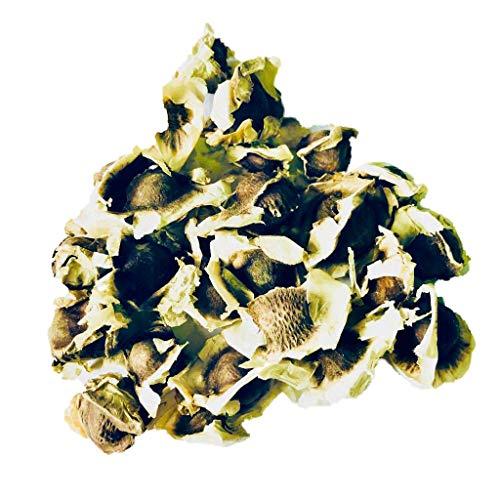500 Semillas Moringa Oleifera By Samenchilishop
