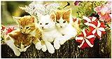 UniqueTowel Handtuch - 50 x 100 cm - Motiv 3 niedliche Kätzchen Katzen-Kinder