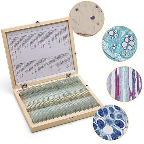 100 Prepared Microscope Slides Set with Wooden Casefor Biological Science Education