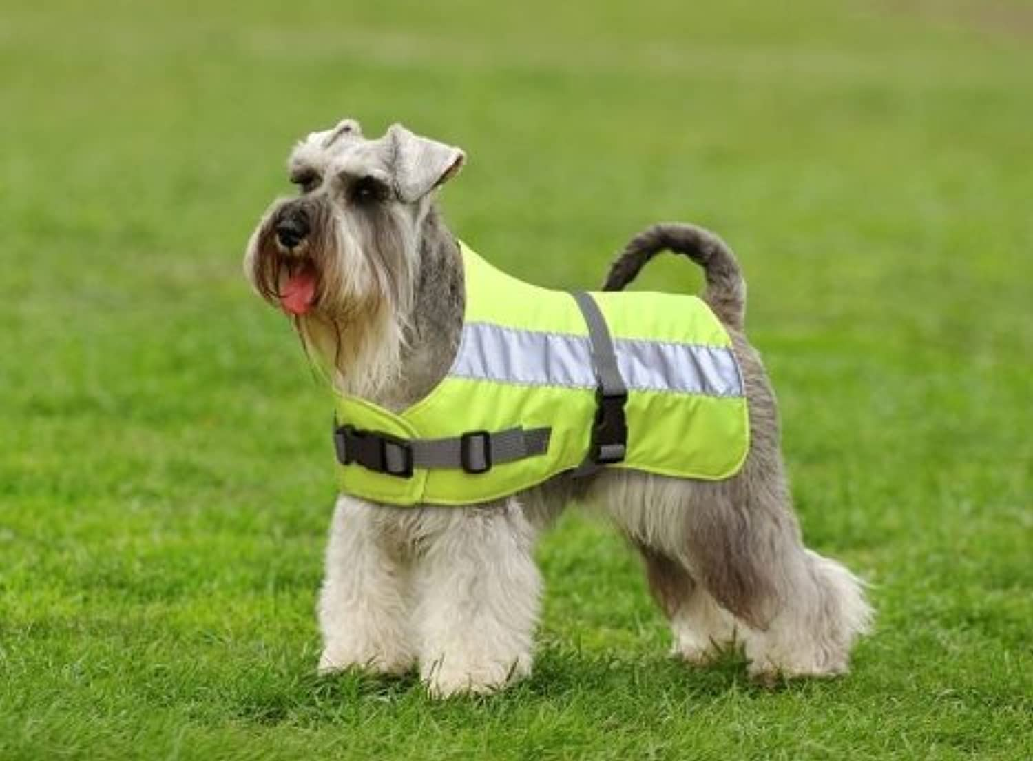 Flectalon Dog Jacket HiViz 18 Inch or 45cm Yellow