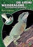 Die Grüne Wasseragame: Physignathus cocincinus (Art für Art:...