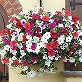ホームガーデン200個/ロットの混合色カーネーションの花の種美しい素敵な花の種