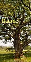 Baeume 2021
