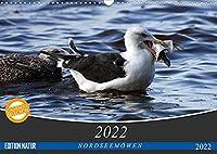 NORDSEEMOeWEN (Wandkalender 2022 DIN A3 quer): Bodenbrueter (Monatskalender, 14 Seiten )