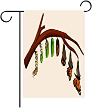 Hayden Harpergfxnjnjn1a Garden Flag Outdoor Flag House Flag Banner A Set of Butterfly Life Cycle Decorated for Outdoor Holiday gardens12x18in