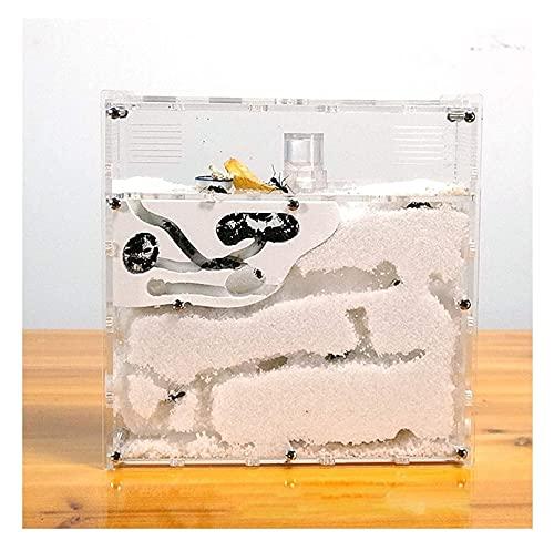 M3 Decorium Pet PEADER HEV Tubo DE Vidrio Tubo Mini HET Nave con EL ÁREA Activo ARRÍCULO DE INSECTOR DE ACRÍLICO CASA DE Ant Natural Y ECOLÓGICA (Color : White, Size : 174x52x176mm)