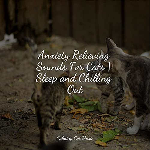 RelaxMyCat, Cat Music & Music for Cats Project
