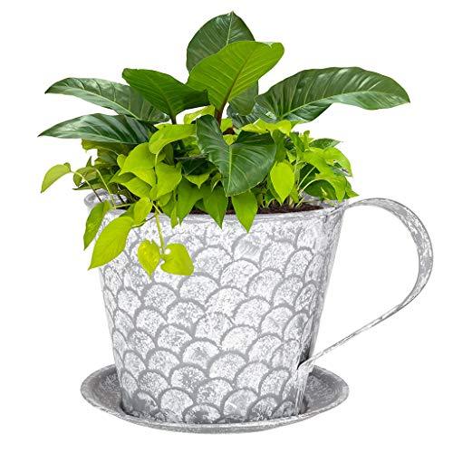 Dibor Flower Pot Novelty Teacup Saucer Planter Basket Window Herbs Pot (Scalloped)