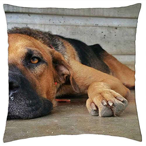 BXBX Throw Pillow Cover (20 x 20 Pulgadas) - Patas de Nariz de Perro Ojo marrón Pared Triste Concreto