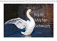 Hallo, Mister Schwan (Wandkalender 2022 DIN A4 quer): Meine schoensten Schwaene (Monatskalender, 14 Seiten )