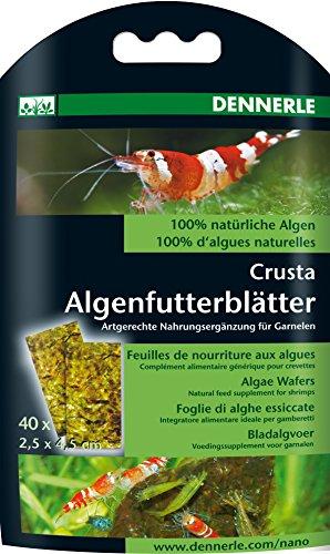 Nano feuilles d'algues