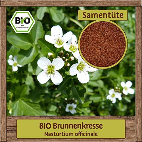 Samenliebe 2000 Brunnenkresse Samen Nasturtium officinale Wasser-Kresse Kräuter-Samen einjährig Saatgut für ca. 3m²