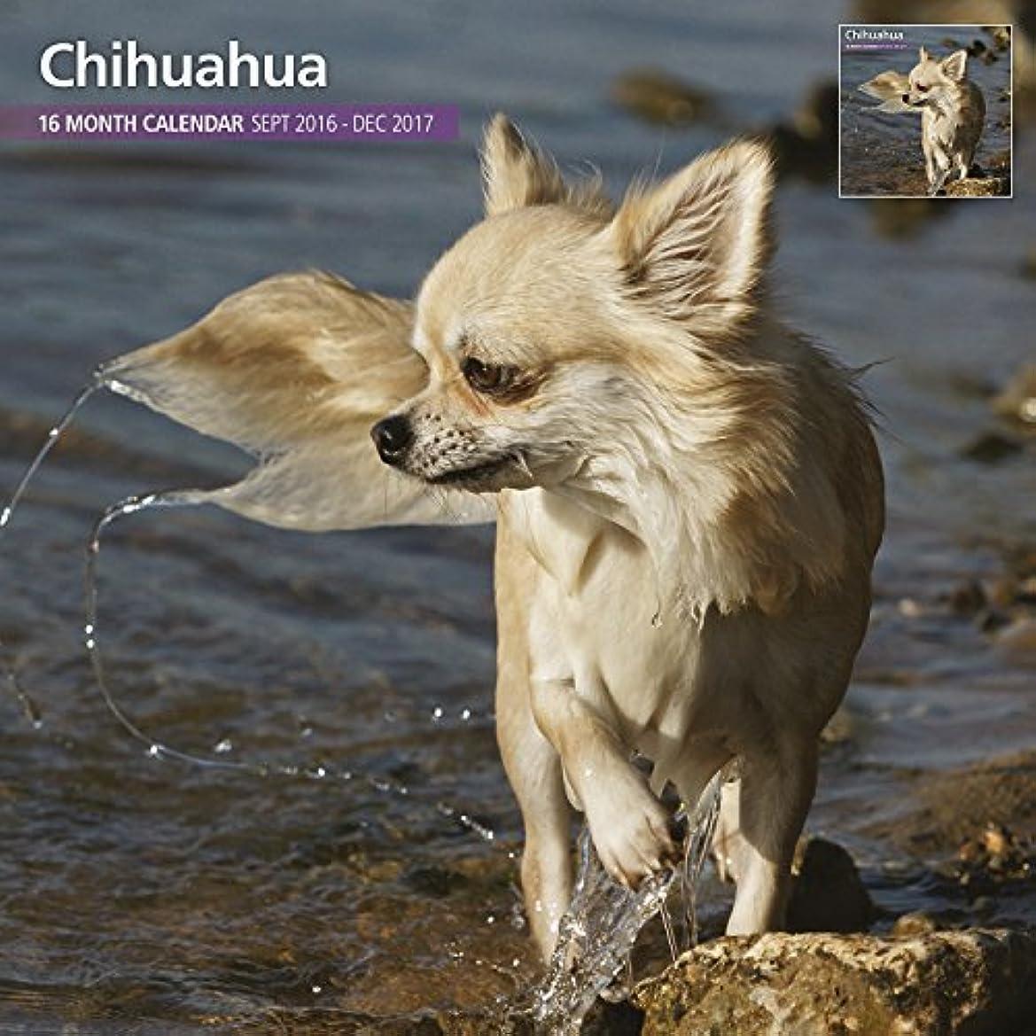 常識ジョガーミシンMagnet & Steel 2017 Chihuahua Calendar Traditional Calendar [並行輸入品]