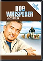 Dog Whisperer With Cesar Millan: Stories From [DVD] [Import]