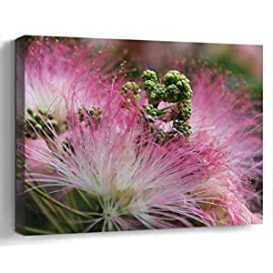Wall Art Canvas Print Photo Artwork Home Decor (24×16 inches)- Flower Pink Blossom Mimosa Silk Summer Natur