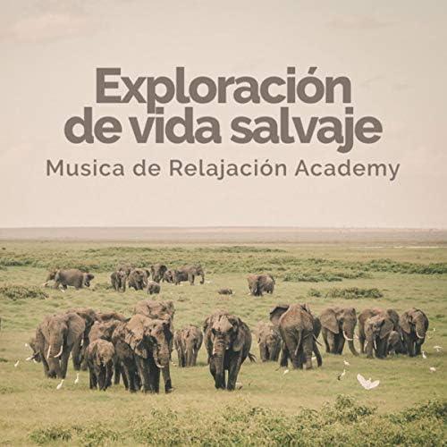 Musica de Relajacion Academy