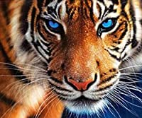 クロスステッチ刺繍キット 図柄印刷 初心者 ホームの装飾 刺繍糸 針 布 11CT Cross Stitch ホームの装飾 青い目の虎 40x50cm