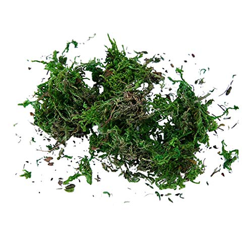 Fenteer Real Moss, Green Lichen, Green Plants for Home Garden Patio Decoration, Reindeer Moss for Lining Plant Flower Garland Decor 100g