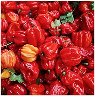 20 Jamaican Hot Red Pepper Seeds - Heirloom and Open Pollinated