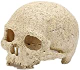 aipipl Pecera Decoración de Acuario Cráneo de Resina Pet Reptil Escondite Cueva Adorno Creativo Deacute; Cor Adornos