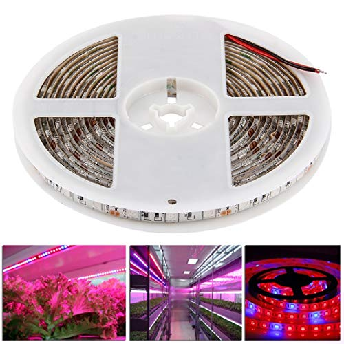 Liyuzhu 300 LED's SMD 5050 60 LEDs/m, Lengte: 5m, DC 12V 3: 1 rood + blauw Aquarium Greenhouse hydrocultuur plant groeit Lamp Waterproof Epoxy Rope Light,