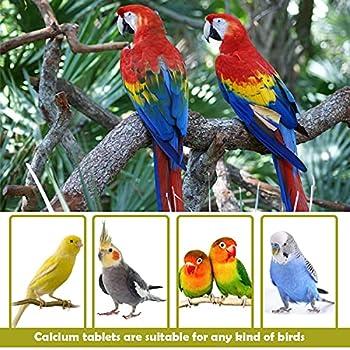 2 Pcs Bloc de Calcium pour Oiseaux Oiseaux Complément de Base Naturel BPS-4129 * 2