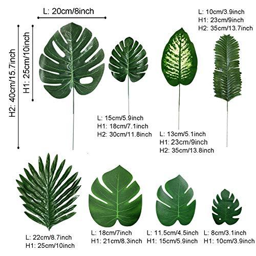 PietyPet Plantas