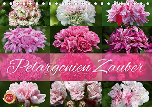 Pelargonien Zauber (Tischkalender 2021 DIN A5 quer)