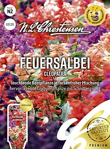 Feuersalbei Cleopatra, leuchtende Beetpflanze in farbenfroher Mischung, bienenfreundlich, Samen