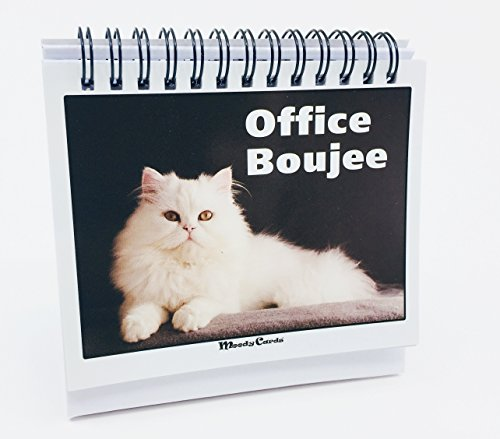 Office Gift for Cat Lovers - Moodycards! Make Everyone Laugh with These Adorable and Hilarious Cat Memes - Let The Kittys Tell Everyone How You Feel! A Terrific Office Gift! 25 Different Moods