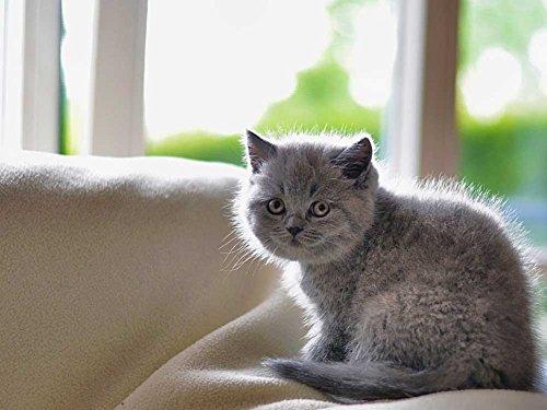 猫–キャンバスプリント24x 16インチ、フレームなし)