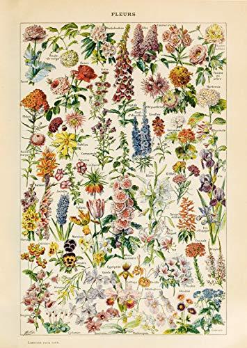 Follygraph Fleurs Vintage Poster - Blumen Bild, Adolphe Millot 1909 Reprint