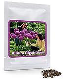 Magic of Nature Riesen Zierlauch - 30 Samen je Pack - Optimales Wachstum bis zu 150cm - Winterharte Zierpflanze für Deinen Garten - Violette Blütenfarbe - Allium giganteum - mehrjährig