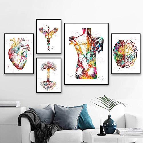 CorazóN Cerebro AnatomíA Humano AnatomíA Poster Impresiones óRgano AnatomíA Medicina Pared Arte Acuarela Arte De La Lona Pintura ClíNica MéDicos Decoracion Cuadros Sin Marco