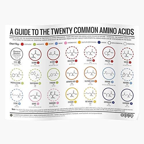 Biology Acids Science Biochemistry Organic Amino Chemistry Proteins Home Decor Wall Art Print Poster 11.7 x 16.5 inch
