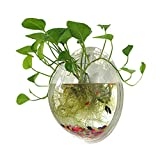 Sweetsea Hanging Wall Mounted Fish Bowl Betta Tank Aquarium Wall Decor Plant Fish Bubble - Clear (Medium)