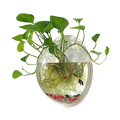 Sweetsea Hanging Wall Mounted Fish Bowl Aquaponic Tank Aquariums Plant Fish Bubble - Clear (Medium)