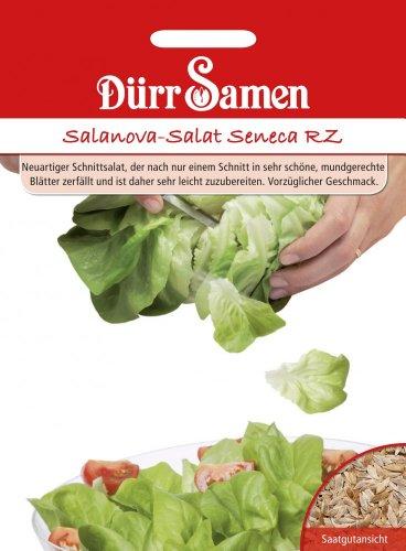 Salatsamen - Salanova-Salat Seneca von Dürr-Samen