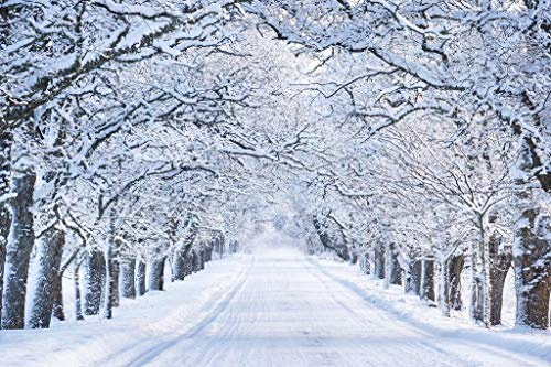 Snowy Winter Street Snow Covered Trees Photo Cool Wall Decor Art Print Poster 36x24
