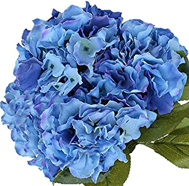 """Nikko Blue Hydrangea - 2 1/2"""" Potted Shrub - 6"""" - 12"""" Tall Healthy Plant - 3 Pack By Growers Solution"""