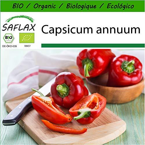 SAFLAX - BIO - Paprika - California Wonder - Rot - 20 Samen - Mit keimfreiem Anzuchtsubstrat - Capsicum annuum
