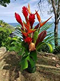 Large Hawaiian Tropical Fresh Flower Arrangement - GROWN IN HANA, HAWAII TO ORGANIC STANDARDS - Includes Bold Tropical Flowers & Greenery - A Total of 20 Stems!