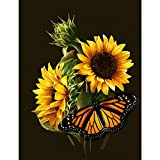 Bemaystar DIY 5D Diamond Painting by Number Kit, Full Round Diamond Crystal Cross Embroidery Art Crafts Decoration for Family Wall Sunflowers and Butterfly 11.8 x 15.8 inches