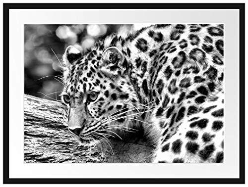 Picati aufmerksamer Leopard auf Baumstamm Bilderrahmen mit Galerie-Passepartout/Format: 80x60cm / garahmt/hochwertige Leinwandbild Alternative