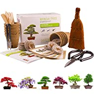 Bonsai Tree KIT Gardening Germination